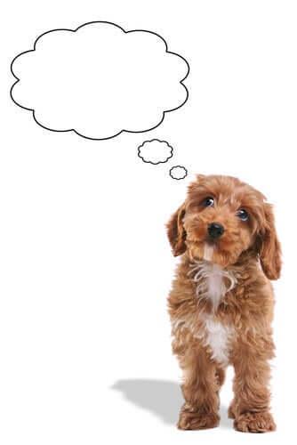 Os cães podem se esquecer das pessoas?