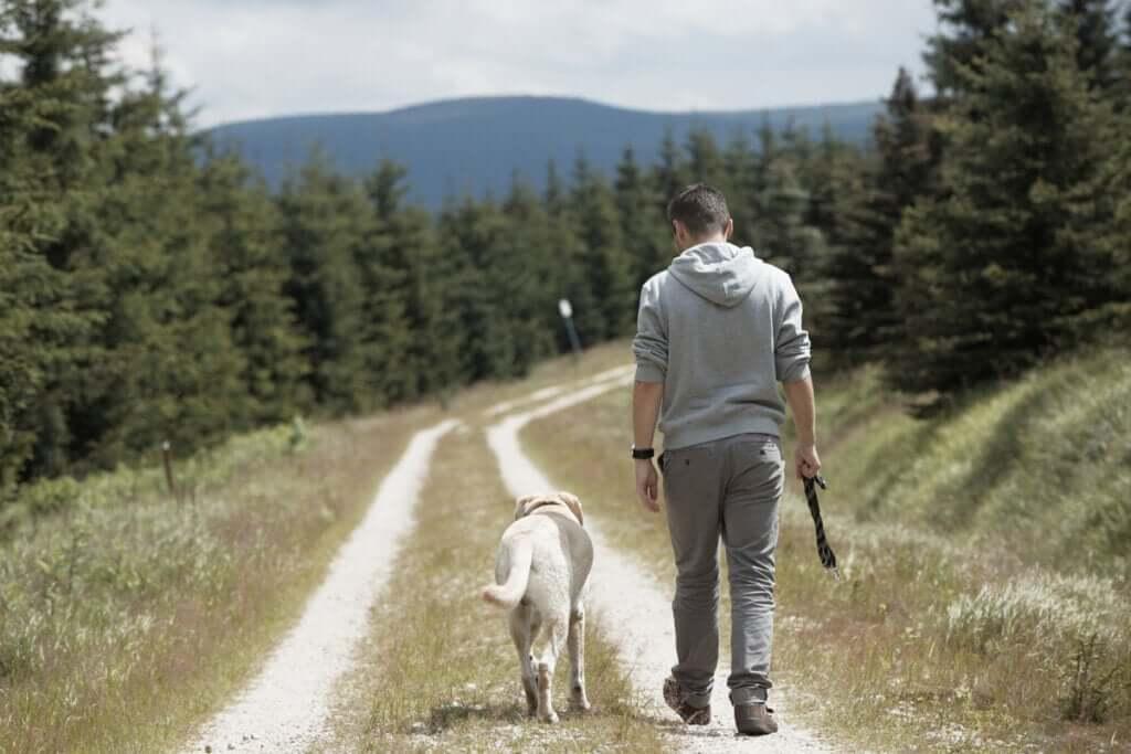 Por que os cães seguem seus tutores?