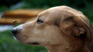 Como tratar picadas em cães?