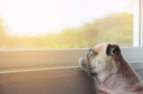 Dicas para animar animais de estimação deprimidos