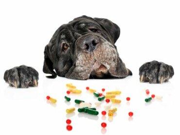 Os anti-histamínicos são seguros para cães?