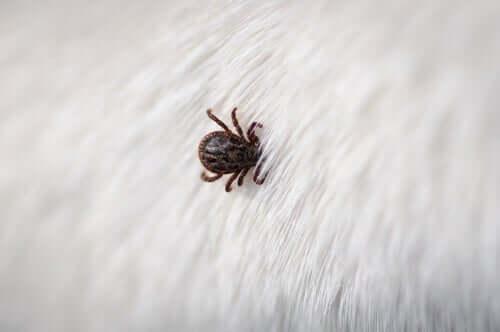 a importância de evitar os parasitas nos animais de estimação