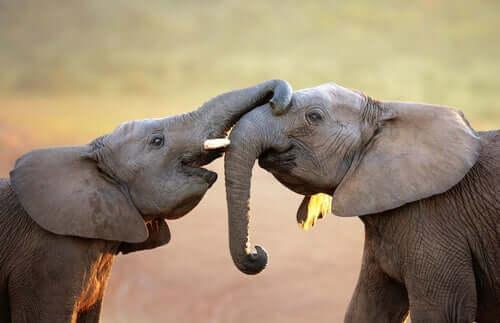 Os animais têm sentimentos?