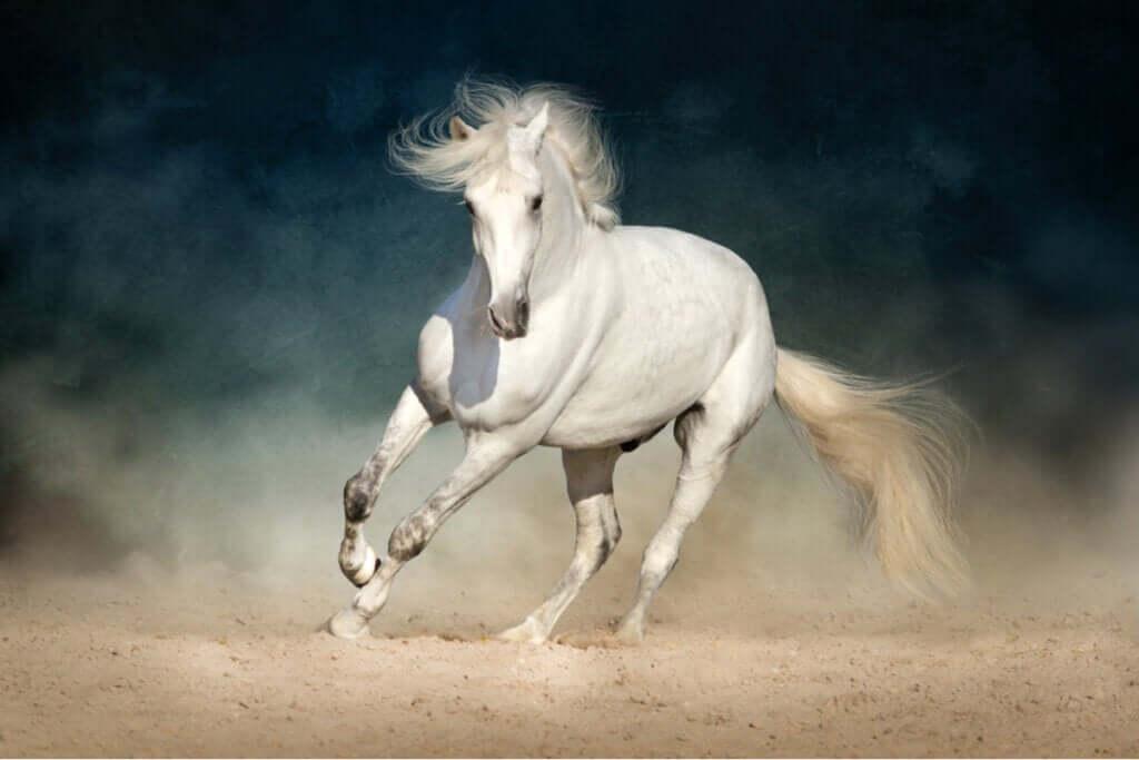 Prevenção e detecção rápida de cólicas em cavalos