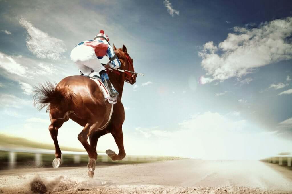 As doenças mais frequentes em cavalos de competição