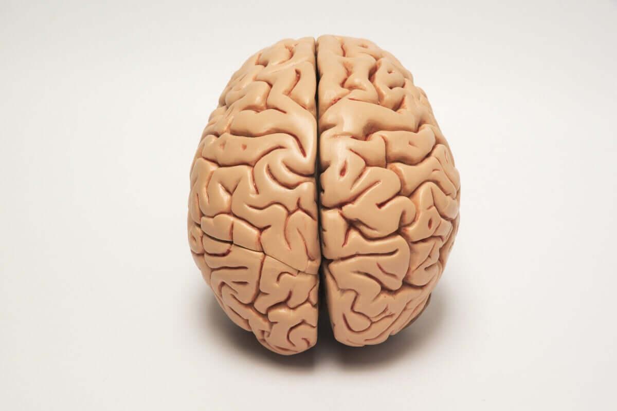 Assimetria cerebral