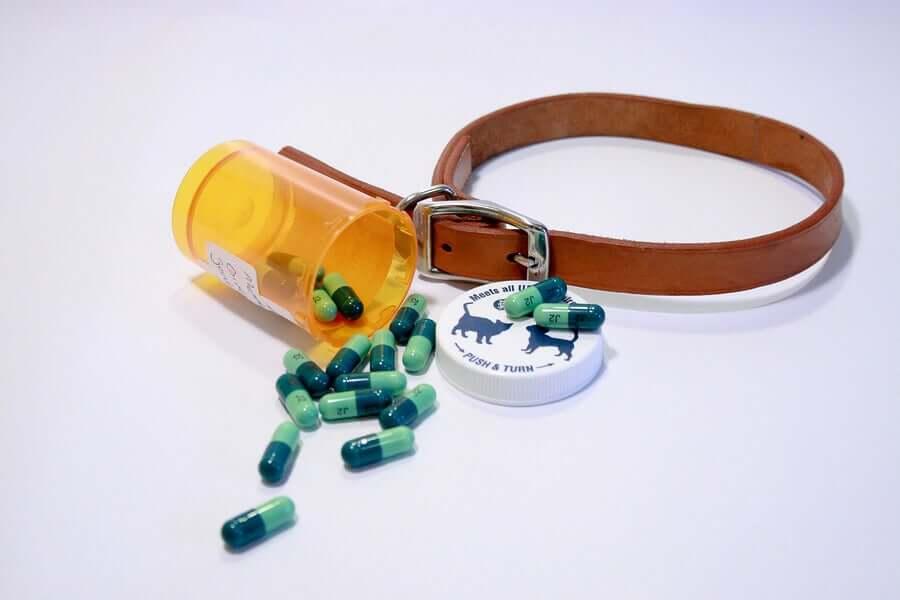Toxicidade dos medicamentos em cães