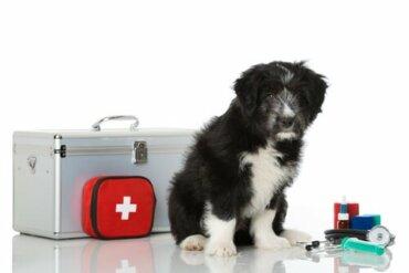 5 coisas que você deve saber para prestar os primeiros socorros ao seu cachorro