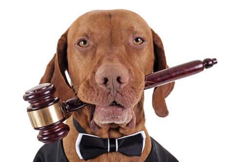 Leis internacionais de direito animal: a Declaração Universal dos Direitos dos Animais