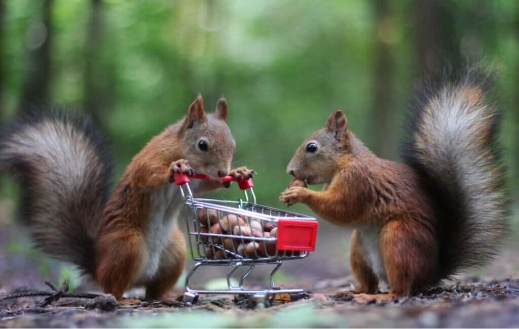 Quem guarda sempre tem: animais que armazenam alimentos