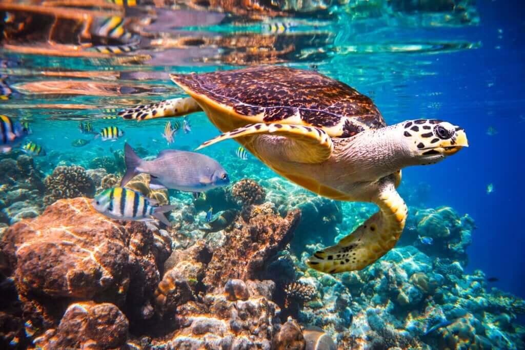 Como as correntes oceânicas afetam a fauna marinha?