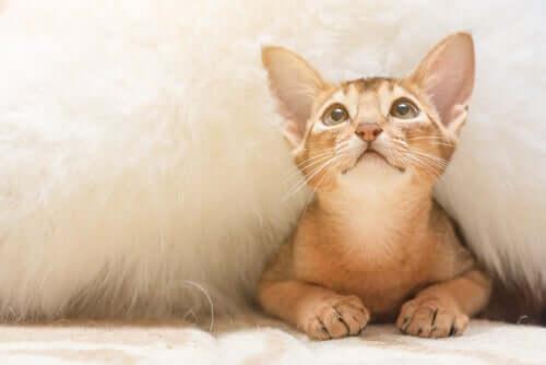 gatos com ansiedade