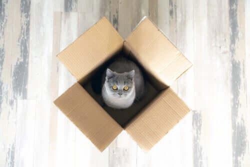 As nove coisas favoritas do seu gato que você não conhecia