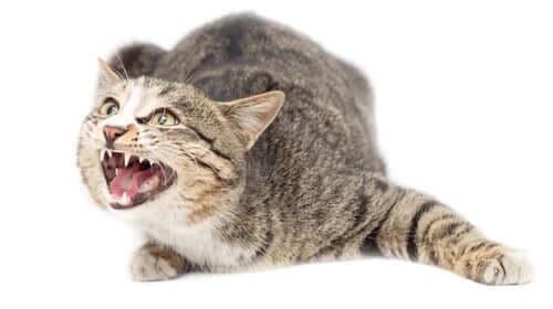 Os gatos têm ansiedade?