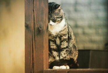 Três doenças mentais em gatos