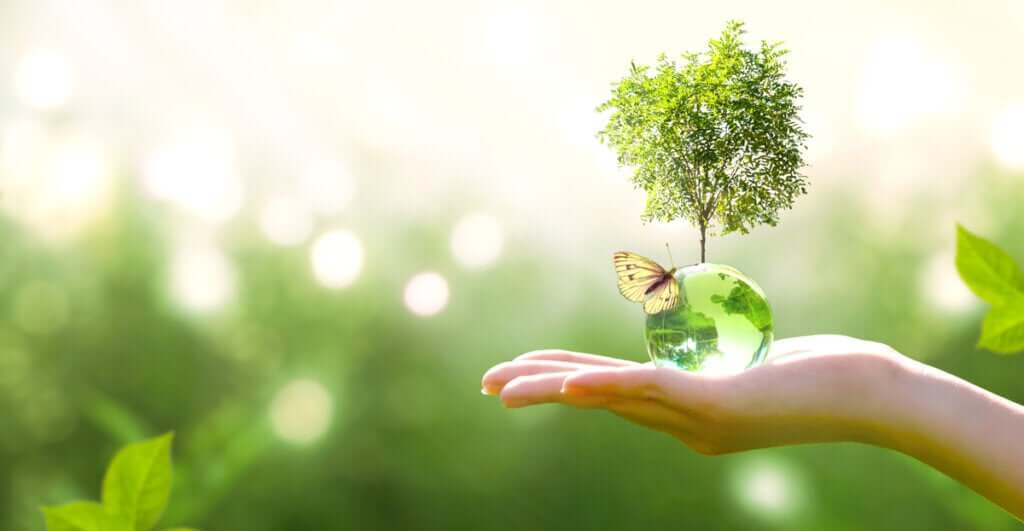 O que é sucessão ecológica?