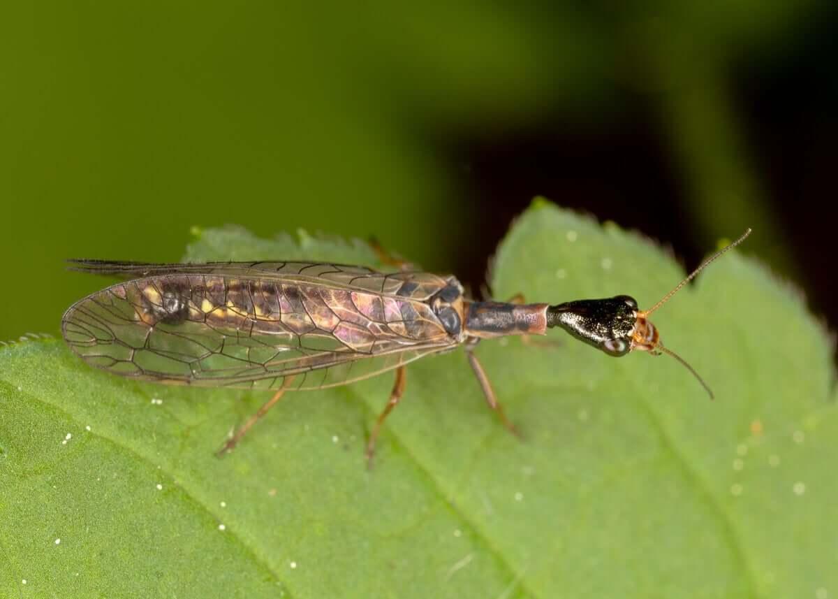 O curioso caso dos insetos controladores de pragas