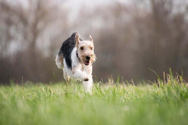 Jogos ao ar livre com seu cachorro