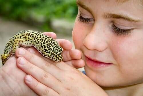 Lagartixa-leopardo: um animal de estimação ideal