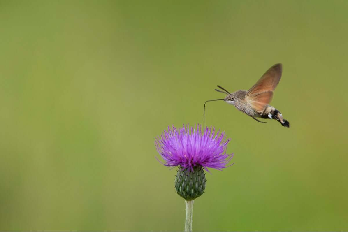 Uma mariposa singular