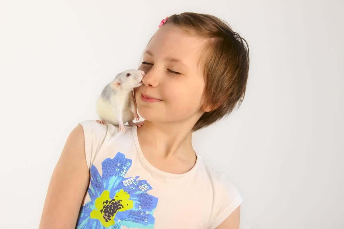O senso de humor em ratos