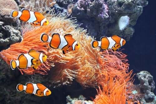 Limpando um aquário marinho