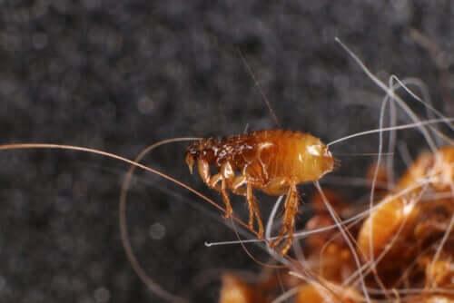Por que é importante evitar os parasitas nos animais de estimação?
