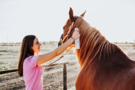 Tratamentos e cuidados com a sarna em cavalos