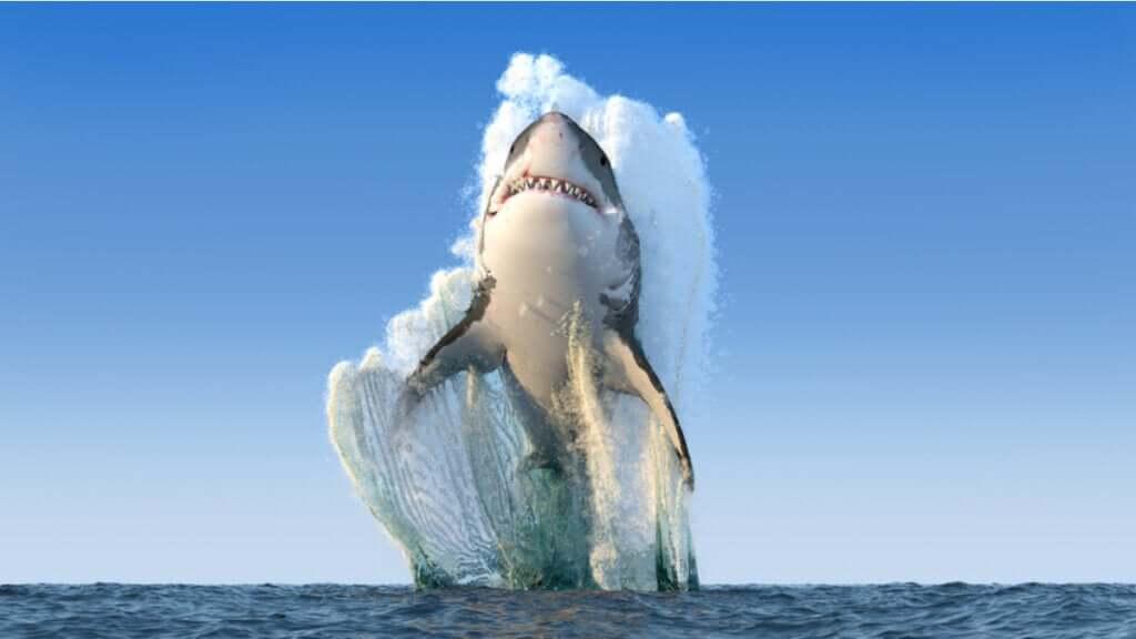 É verdade que os tubarões não ficam doentes?