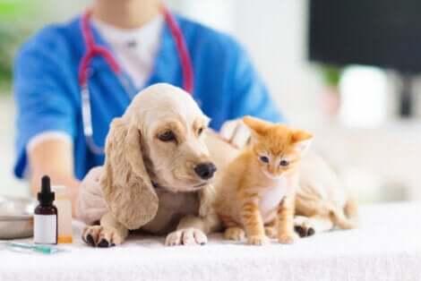 Terapia com laser para animais de estimação