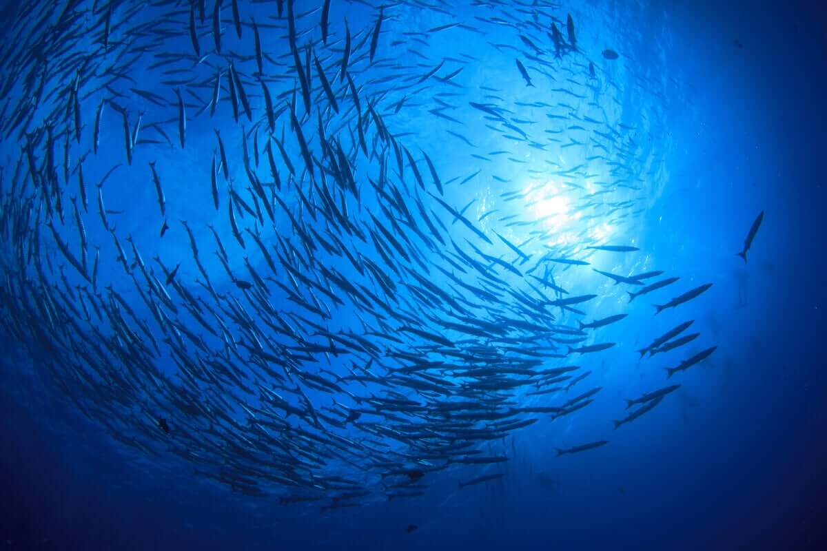 A razão de ser de muitos pesqueiros