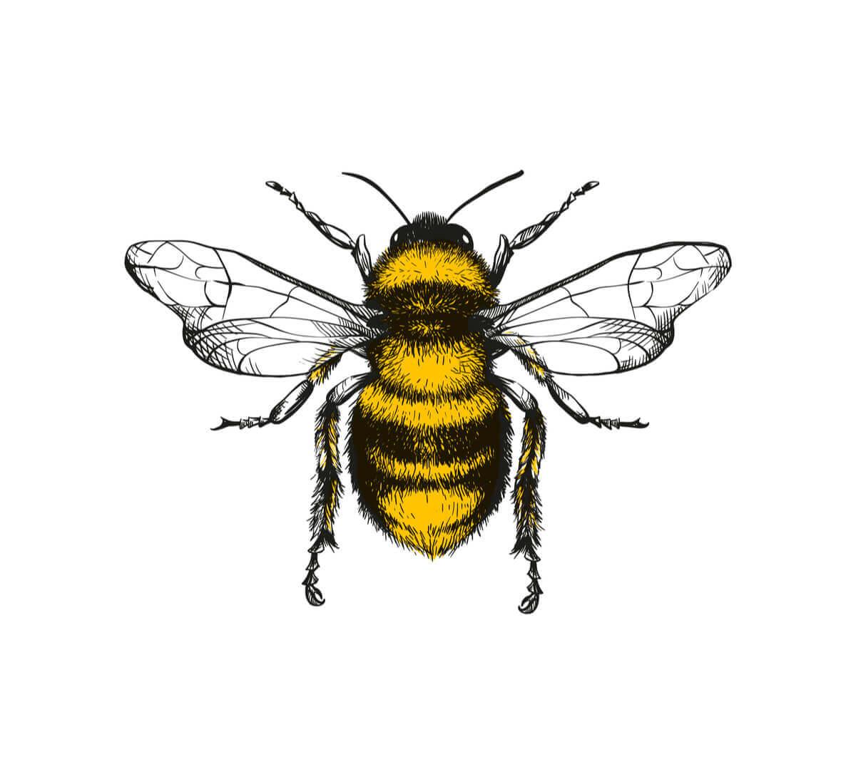 A dança das abelhas: a linguagem secreta