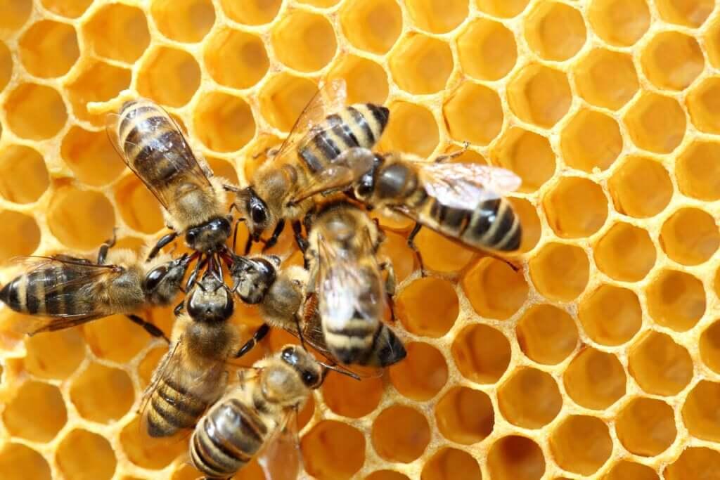 A dança das abelhas