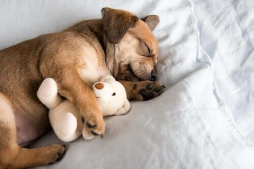 5 dicas para ajudar o seu filhote a dormir a noite toda
