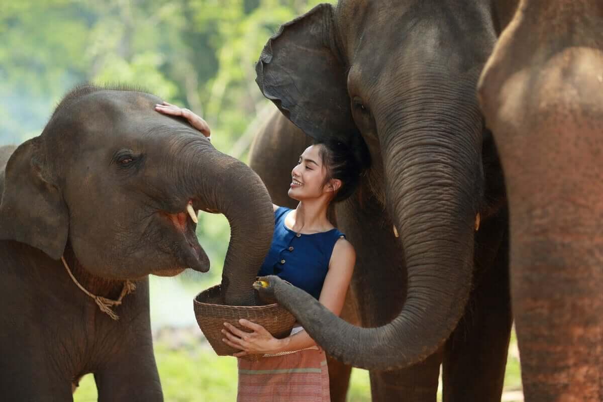 Ecologia genérica da alimentação dos elefantes
