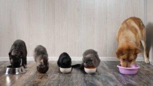 Animais de estimação insaciáveis: 3 dicas de alimentação