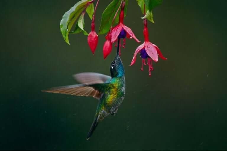 Cinco aves sugadoras de néctar que você talvez não conheça