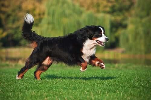 Vitamina D na ração seca para cães