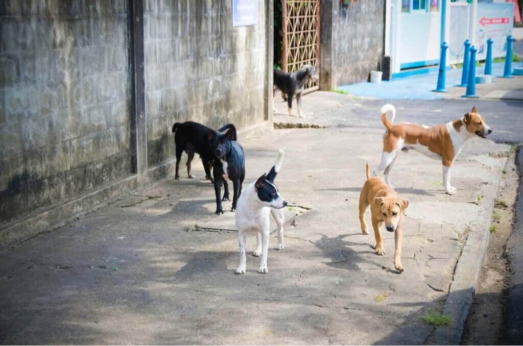 Em busca dos cães perdidos após a explosão de Beirute
