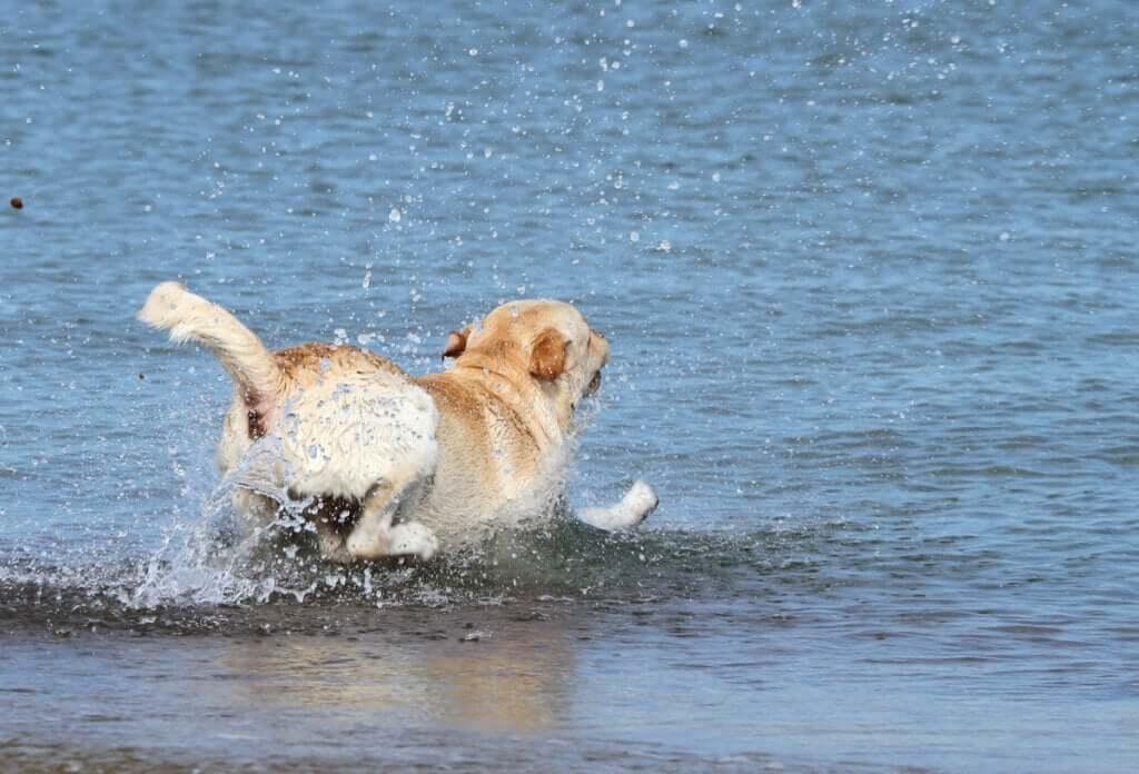 Resgate marítimo salva um cachorro no mar