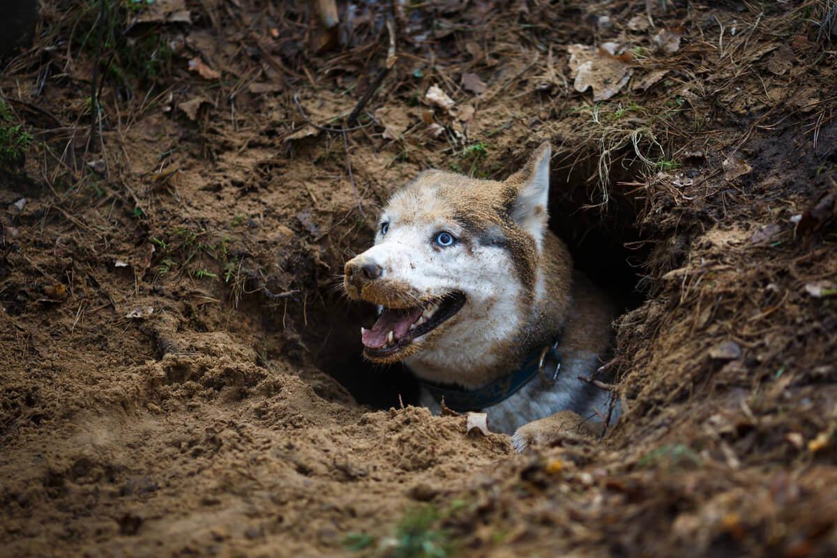 Sobre a domesticação canina e seus ancestrais
