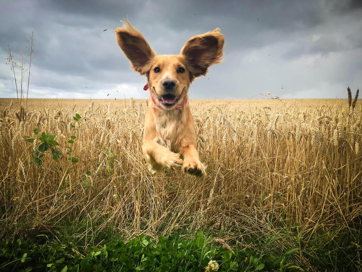 As origens de um cachorro foram estudadas