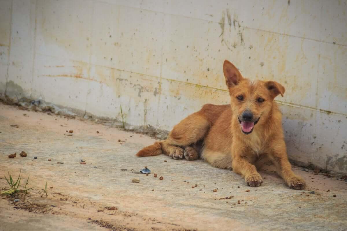 Esperança para animal e famílias