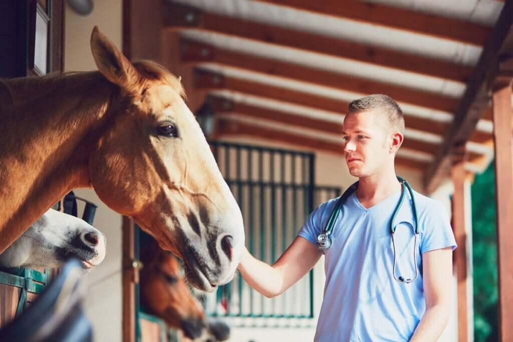 O que é a laminite em cavalos?