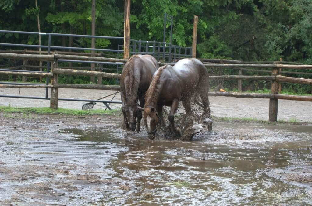 Cavalos resgatados de uma enchente dão à luz: o milagre da vida