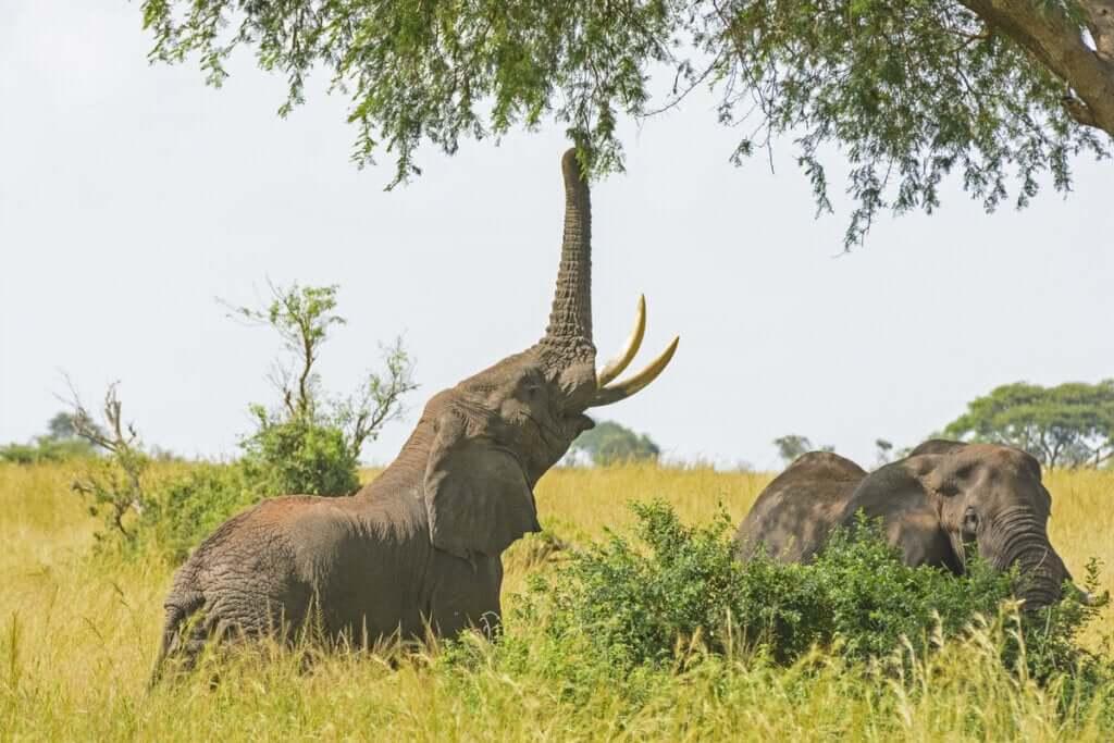 As particularidades da alimentação de elefantes em cativeiro