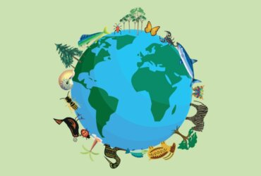 Quantas espécies animais existem na Terra?