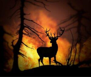 Animais resgatados: as vítimas dos incêndios florestais