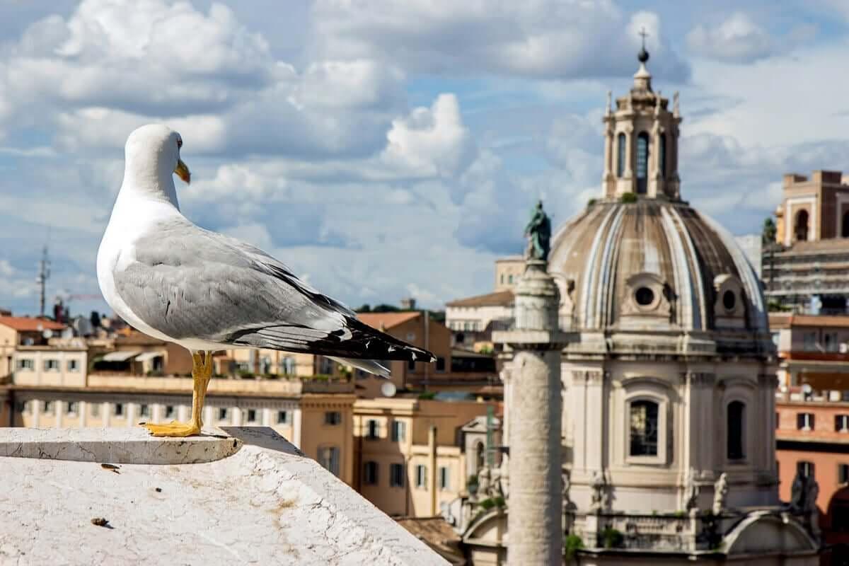 Aves sob estresse podem viver menos