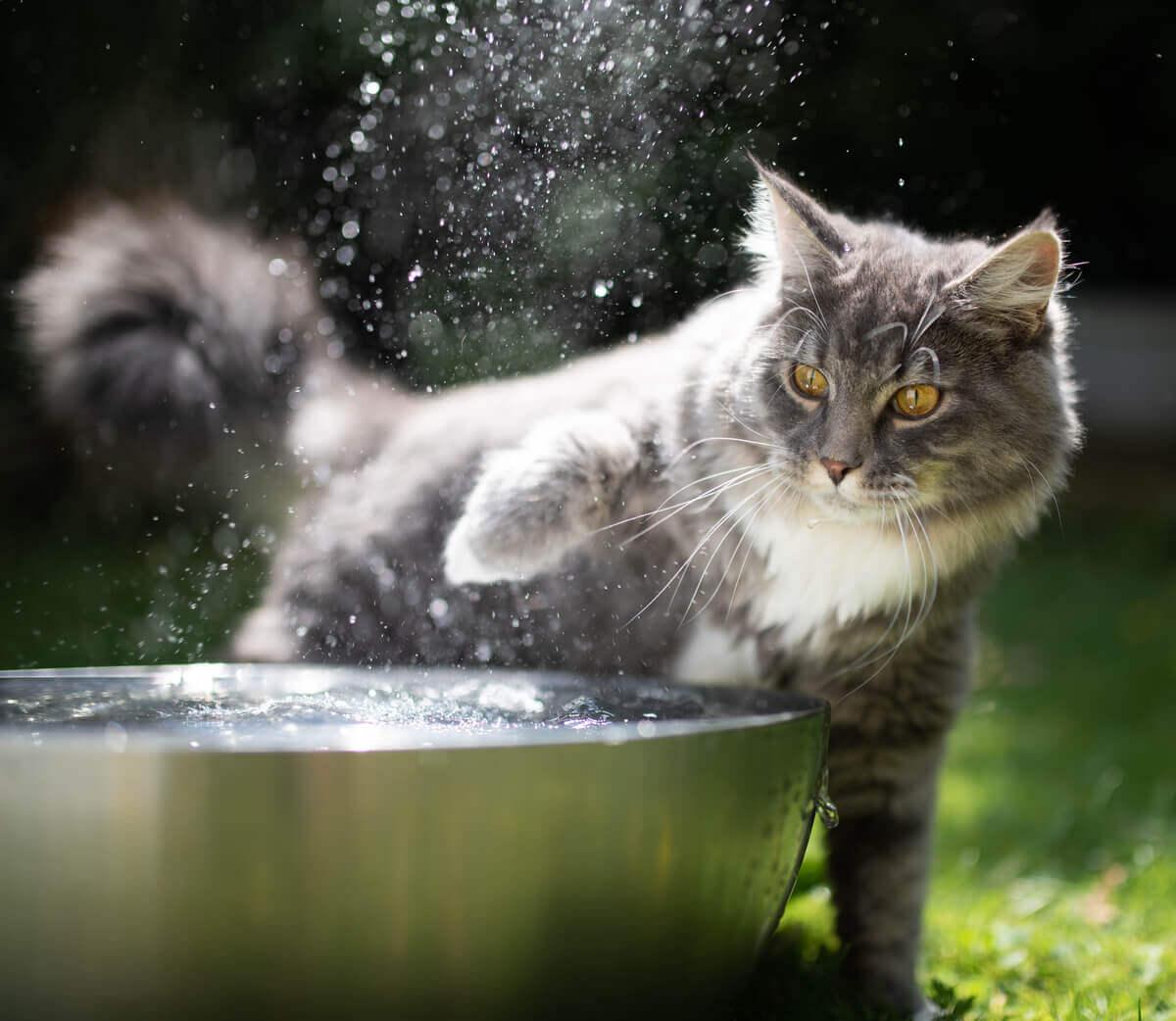 Você deve dar banho no seu gato?